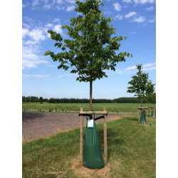 Tree King Wassersack