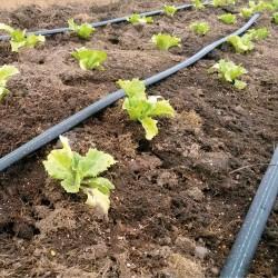 Feld und Gemüsebau